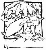 Coloring Anteater Anteaters Adults Drawing Adult sketch template