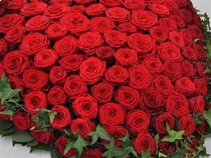 1 Rote Rose Bedeutung : bilder thread seite 6113 allmystery ~ Whattoseeinmadrid.com Haus und Dekorationen
