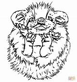 Porcupine Coloring Cute Baby Pages Printable Drawing Porcupines Supercoloring Designlooter Drawings Version Categories 1040 04kb sketch template