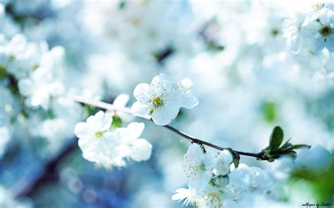 cool color images flower wallpaper 67 not go away