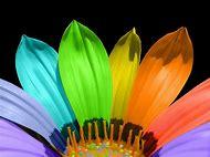 Color Flower Petals