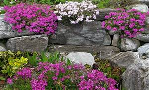 Pflanzen Für Trockenmauer : kr uter trockenmauer ~ Orissabook.com Haus und Dekorationen