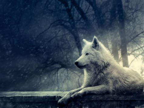 Beautiful Wolf Wallpaper Computer by Wolf With Sun In Background Wolves Imagenes De Lobos
