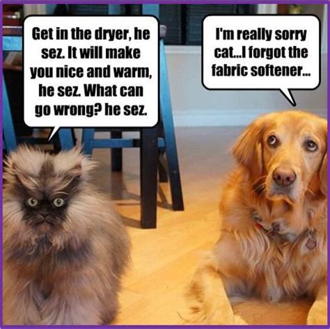 Dog And Cat Memes - dogs and cats amazing memes
