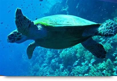 Verde Cape Diving Snorkeling Islands Scuba Sal