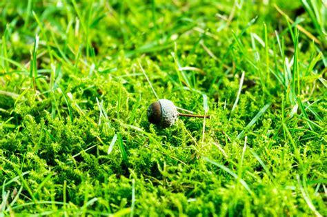 Pilze Im Garten Rasen Vernichten by Mittel Gegen Moos Im Rasen Mittel Gegen Moos Unkraut Und