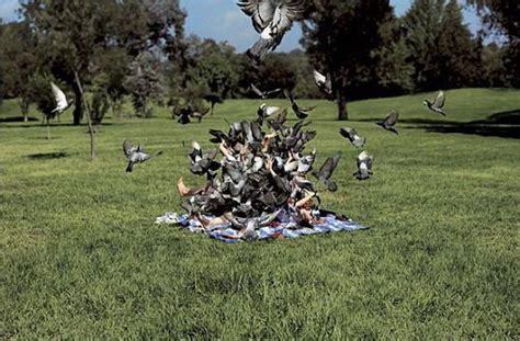when birds attack 47 pics