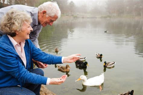 don t feed the ducks these six things including bread