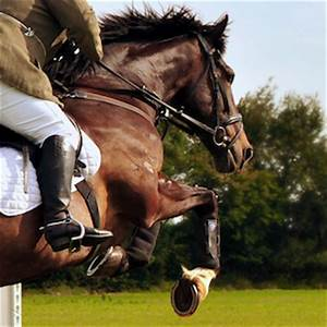Professional Horse Jumping Photography | www.pixshark.com ...