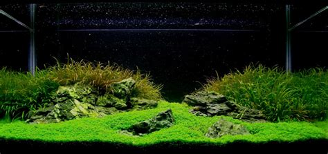 Aquascaping Magazine by Aquascaping World Magazine Trial And Error