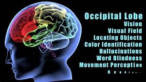 Traumatic Brain Injuries  Effects Of Damage To Different