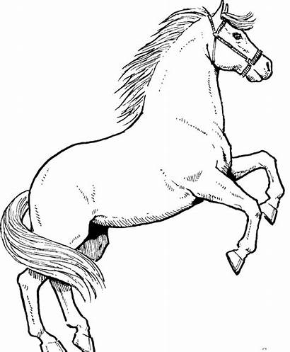 Coloring Horse Pages Stallions Ikids