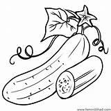 Cucumber Coloring Drawings Printable Leaf Sheet Coloringfolder Cartoon Lovesmag Vegetable sketch template