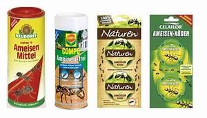 Mittel Gegen Ameisen : was hilft gegen ameisen im haus und in der wohnung ~ Buech-reservation.com Haus und Dekorationen