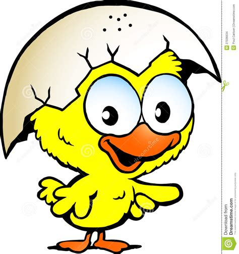 cute baby chicken stock images image