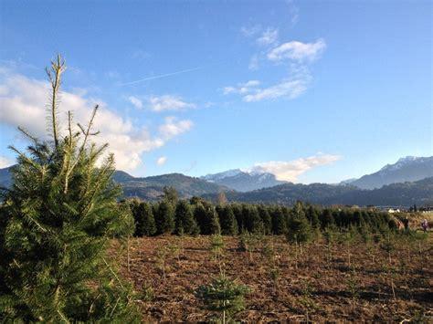 pine meadows christmas tree farm news pine tree farms