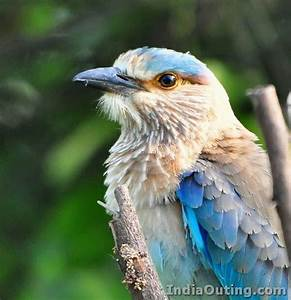 Keoladeo National Park | Pictures & Information | India Travel