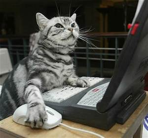 Cats love computers (20 great pictures) | Kitty Bloger