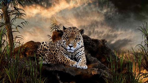 Animals Wallpaper High Resolution - animaux fonds d 233 cran haute r 233 solution t 233 l 233 chargez