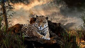 fond d'écran animaux - animals wallpapers - wallpapers ...