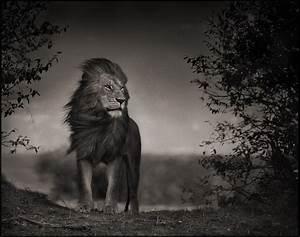 Tableau Lion Noir Et Blanc : lakota voodoo company airsoft photos photographes ~ Dallasstarsshop.com Idées de Décoration
