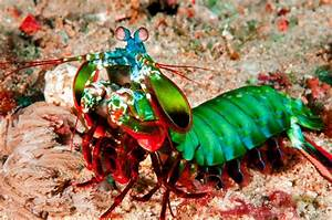 15 Most Colourful Animals