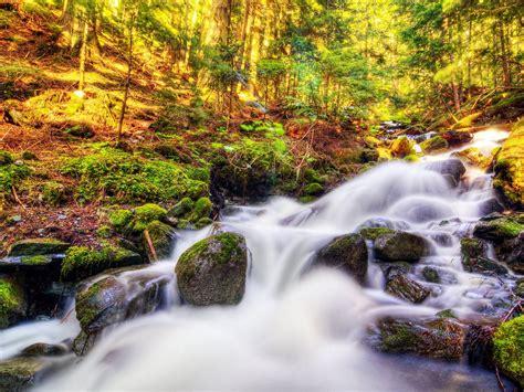 Nature Landscape Canada Autumn Forest Stream Moss Stones ...