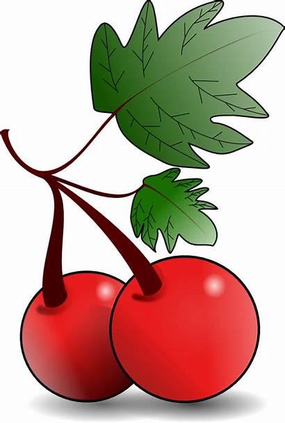 Fruit Clip Cherry Onlinelabels Cherries
