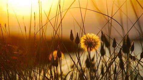 壁紙 サンセット、草、花、夕暮れ、初夏 2560x1600 Hd 無料の