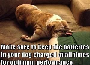 English Bulldog funny ~ Baggy Bulldogs | Funny | Pinterest ...