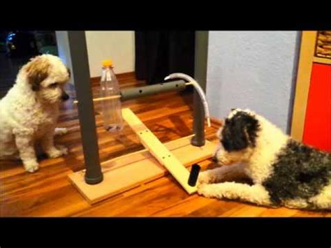 hundespielzeug selber bauen selbstgebautes intelligenzspielzeug f 252 r hunde hundetraining activity