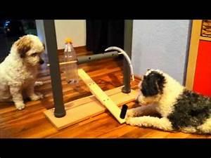 Hundeplanschbecken Selber Bauen : selbstgebautes intelligenzspielzeug f r hunde hundetraining dog activity youtube ~ Markanthonyermac.com Haus und Dekorationen