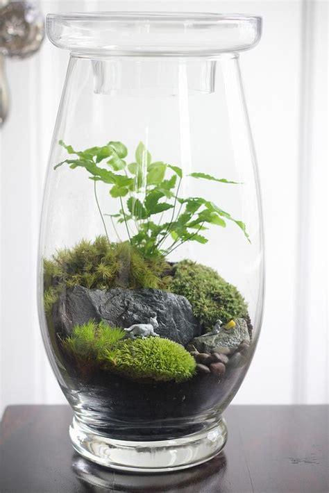 small terrarium plants 41 best images about my terrariums on pinterest