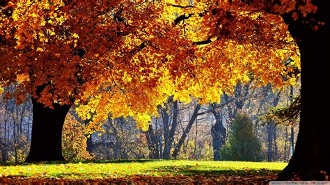 Fall Backgrounds by Beautiful Fall Pictures Wallpaper 60 Images
