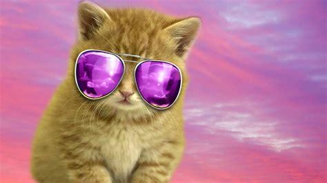 Cool Hd Backgrounds Cool Cat Wallpaper Hd