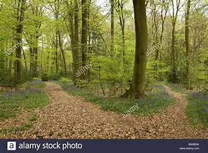 Two Different Paths | www.pixshark.com - Images Galleries ...