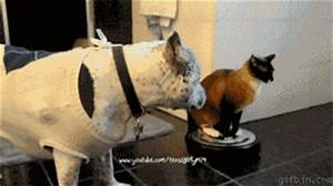 Roomba cat slap - Full screen | Best Funny Gifs And ...