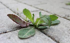Traitement Mauvaise Herbe : d sherbant antimousse naturel ~ Melissatoandfro.com Idées de Décoration