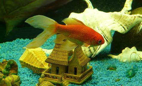 poissons pour nano aquarium eau douce 28 images aquarium d eau douce l aquariophilie pour