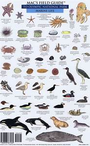 Mac Field Guide Of Olympic National Park Mammals