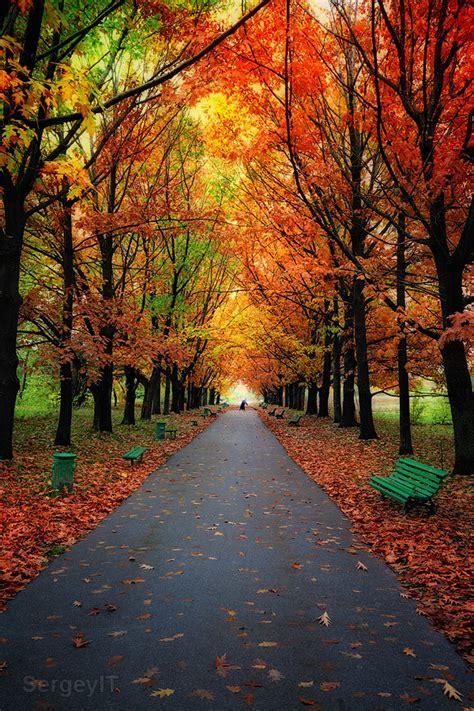 autumn trees  park  colorful leaves autumn trees