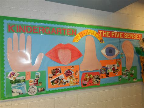 kindergarten    senses bulletin board meri cherry
