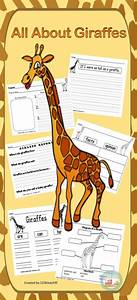 All About Giraffes  Writing Prompts  Graphic Organizers
