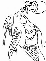 Crow Coloring Pages Crows Birds Printable Cheerleading Stunt Bird Sheet Getcolorings Template Recommended sketch template