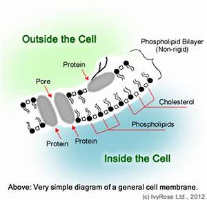 T. C. Marsh Preparatory Academy 6th Grade Science!: Cells ...