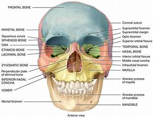 Anatomy Diagrams Of The Human Skull