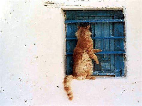 cat window free desktop wallpaper cat an window xp
