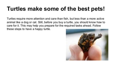 Best Heat Ls For Turtles by Taking Care Of A Pet Turtle