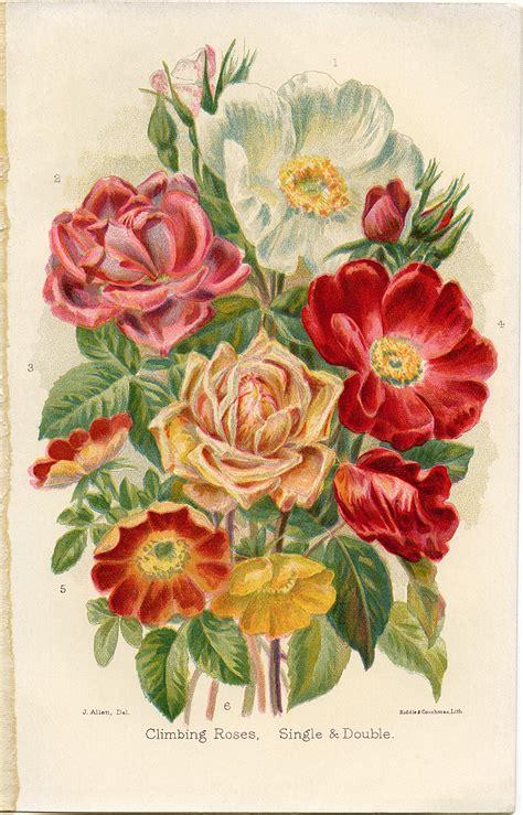 Free Vintage Clip Free Vintage Clip Climbing Roses Design Shop