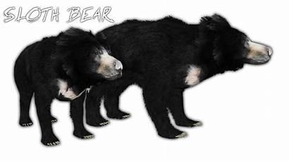 Sloth Bear Zt2 Wiki Okeanos Wikia